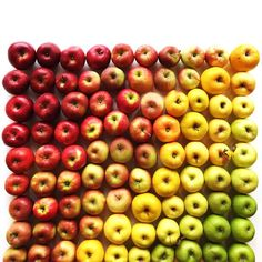 food-arrangement-photography-foodgradients-brittany-wright-36