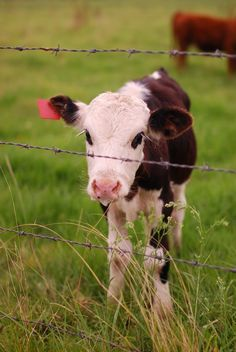 Real baby farm animals - photo#11