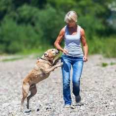 It is important to know how to care for our dogs. Here are 10 useful dog care tips for all dog parents. Dogs Peeing In House, House Dog, Stinky Dog, Dog Breath, Dog Smells, Dog Pee, Wolf, Dog Behavior, Training Your Dog
