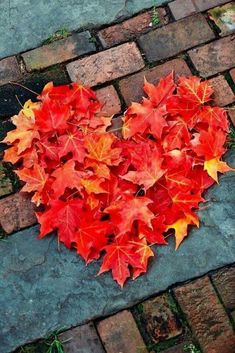 Leaves red orange autumn heart I ❤️ fall. Feels like summer today Fall Pictures, Fall Photos, Fall Images, Hello Autumn, Autumn Day, Autumn Nature, Heart In Nature, Autumn Aesthetic, Fall Wallpaper