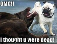I've seen this look on Petunia's face when Fancy is playing dead!