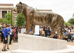 Tom the Bengal tiger is the mascot for the University of Memphis.
