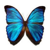 sommerfugle - Google-søgning