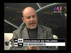 Orquideas de los Yungas de Bolivia II Entrevista al Dr. Enrique Richard ...