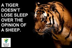 001 tigerquotes.jpg (600×357) Tiger Inspirational Quotes