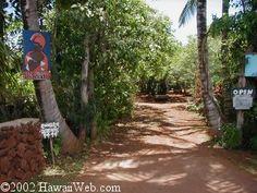 Purdy's macadamia nut farm. A Molokai classic.