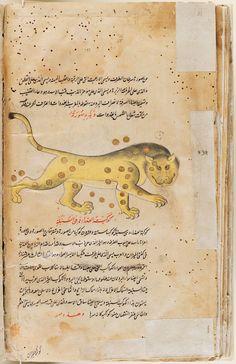 Manuscript of the A