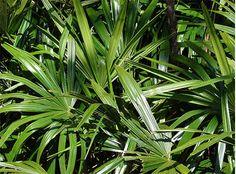 11 plantas que vão purificar o ar de sua casa e diminuir as crises de alergia   Cura pela Natureza.com.br