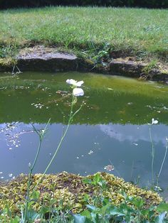 Dad's pond