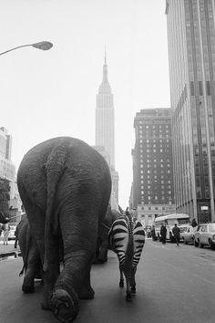 Circus in New York City