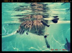 South African Artists, Underwater, Creatures, Waves, Horses, Puppies, Fine Art, Dogs, Prints