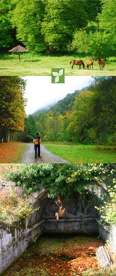 Welcome to the Yenice Forest Trails Biking and trekking routes through spectacular countryside