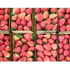strawberry market brazil