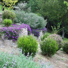 Deer Resistant Mountain Garden