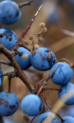Inspired from nature ~ blue & brown #NatureInspired #HomeDeco #mariepauleREALTOR (Chocolate Color Food)