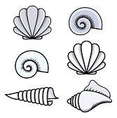 set of sea shells doodle Seashells – Cartoon Vector Illustration Vector Seashells Cartoon, Tattoos, Easy Drawings, Shell Art, Cute Tattoos, Seashell Drawing, Art, Seashell Tattoos, Shell Tattoos