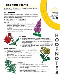 Volume 1, No. 10 features more common poisonous plants your horse may encounter while out in the field. This HoofNote is  is based on a larger article on toxic flora, featured in Issue No. 4, The Performance Horse. Download the PDF here: http://wp.me/p4GGrs-lD