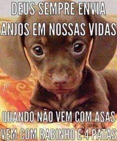 ANJINHOS QUE AMAMOS! <3 #petmeupet #cachorro #gato #amoanimais