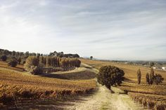 Living the high life in Umbria, the poor man's Tuscany