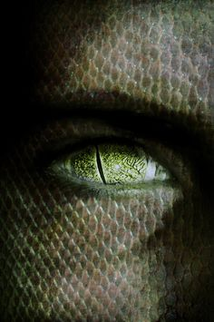 REPTILIAN.........PARTAGE OF U.F.O. PARANORMAL DATABASE.........ON…