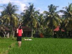 Family Travel Blog for Nomadic World Travel with Kids: 10 things to do in Bali with kids