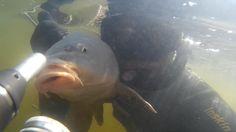 SPEARFISHING! Подводная охота У деревянной баржи