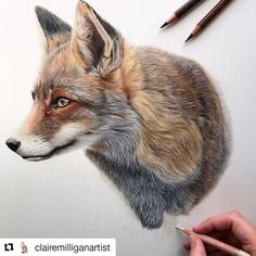 Pencil Art INCREDIBLE TALENT I've been busy working behind the scenes on a private commission this week. It's now time to finish this foxy Animal Sketches, Animal Drawings, Pencil Drawings, Art Drawings, Colored Pencil Artwork, Color Pencil Art, Coloured Pencils, Fox Drawing, Painting & Drawing
