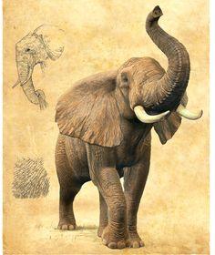 Elephant Quilt, Elephant Art, African Elephant, African Animals, Elephant Photography, Animal Photography, Elephant Images, Scratchboard Art, Foto Transfer