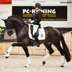 Connassieur dressage KWPN stallion