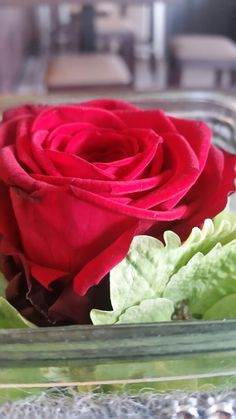 Beautful red follwer