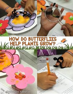 Butterfly Life Cycle learning labs with literacy, writing and math integration. Part of a complete unit of hands-on activities with a culminating foldable butterfly booklet.