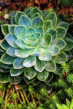 Succulent Photograph - Succulent Beauty by Brian Davis