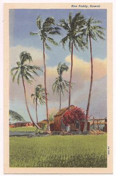 Hawaii Vintage Linen Postcard - Rice Paddy and Hawaiian Hut with Palm Trees and… Vintage Tiki, Vintage Hawaii, Aloha Vintage, Vintage Linen, Photo Postcards, Vintage Postcards, Vintage Photographs, Vintage Photos, Blue Hawaii
