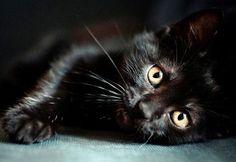 Basta stragi di gatti neri per la festa di Halloween ecco la petizione online