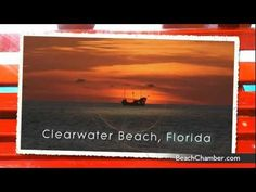 What are you going to do in Clearwater Beach Today?