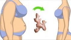 Artigo Água de gengibre morna, um ponto final para o excesso de gordura!