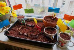 Ein Minigarten für die Fensterbank. Bohnen, Kerne und Karottenreste sprießen lassen: Wie´s geht steht bei belkabelka.com