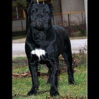 Majoshaza Reme Attila Dogs Animals Attila