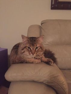 Found Cat - Tabby - Hamilton, ON, Canada L0R 1W0 on October 30, 2015 (13:00 PM)
