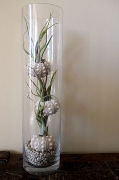 another great way to display air plants