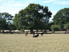View | Darling Buds Farm - The Farmhouse, Bethersden