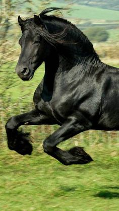 Great action shot of this beautiful black horse!  ***Link to original picture is not there.  If anyone knows its origin,  please leave it in the comments below.  Thank you!