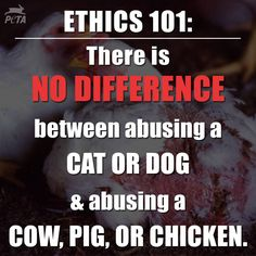 All animals are the same. You cannot love one and eat the other.