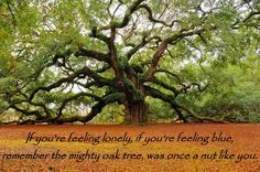 If you're feeling lonely, if you're feeling blue, remember the mighty oak tree, was once a nut like you.