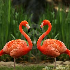 Flamingo Love Talk - Download From Over 45 Million High Quality Stock Photos, Images, Vectors. Sign up for FREE today. Image: 3161290