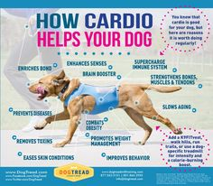 how cardio helps your dogs