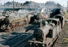 Willesden Shed Yard still full of steam, Steam Trains Uk, Old Steam Train, Diesel Locomotive, Steam Locomotive, Old Trains, Vintage Trains, Steam Railway, British Rail, Train Pictures