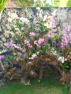 Small Orchid Garden