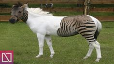 10 Animal Hybrids That Should Not Exist #hybridanimals http://incredibled.com/10-animal-hybrids-that-should-not-exist/