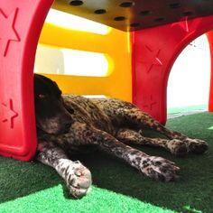 dog's hotel Dog Hotel, Dog Boarding, Parks, Dogs, Vacation, Dog Daycare, Pet Dogs, Doggies, Shelter Dogs